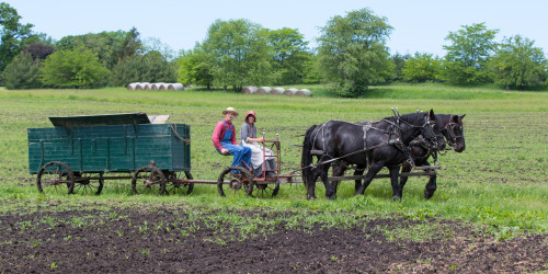"Living History Farms vibrantly embraces the ""Living"" part of its name."